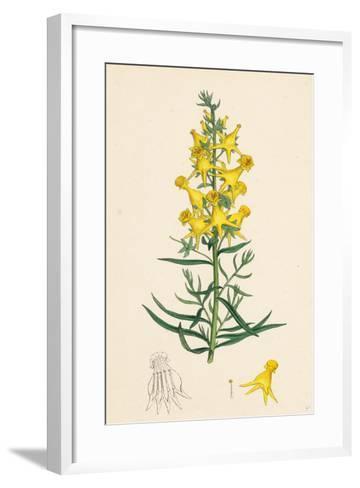 Linaria Vulgaris Peloria Yellow Toadflax Monstrous State--Framed Art Print