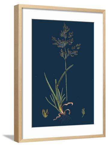 Chrysanthemum Inodorum, Var. Maritimum; Scentless Mayweed, Var. B--Framed Art Print