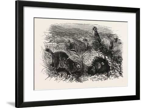 Prairie Dogs and Owls, Buenos Ayres, Trinidad and Tobago--Framed Art Print