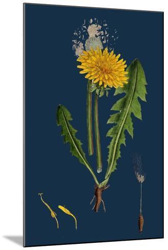 Atriplex Patula, Var. Angustifolia; Narrow-Leaved Orache, Var. A--Mounted Giclee Print