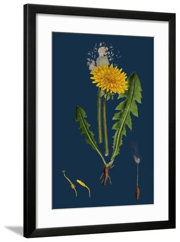 Atriplex Patula, Var. Angustifolia; Narrow-Leaved Orache, Var. A--Framed Art Print