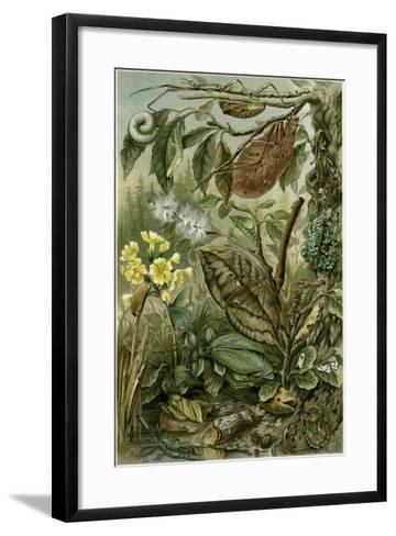 Nature Nineteenth Century Flower Leaves Tree Beetle--Framed Art Print