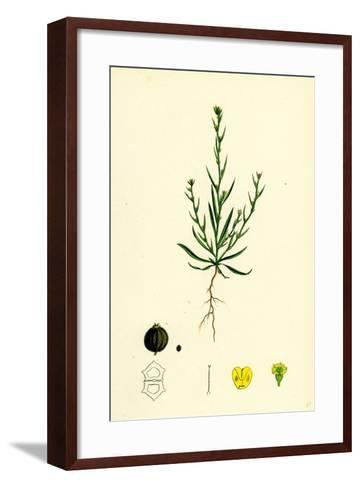Bupleurum Tenuissimum Slender Hare's-Ear--Framed Art Print