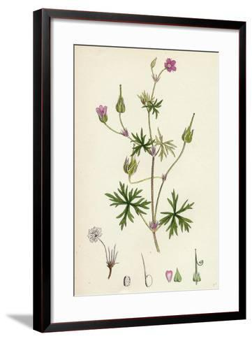 Geranium Columbinum Long-Stalked Crane'S-Bill--Framed Art Print