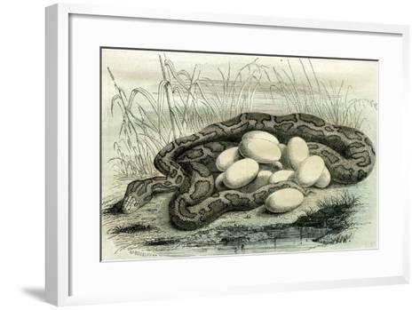 Python Paris Museum, France, 19th Century--Framed Art Print