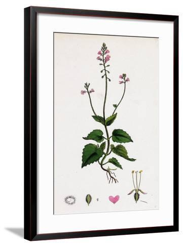Circaea Alpina Alpine Enchanter'S-Nightshade--Framed Art Print