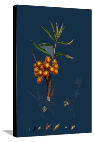 Astragalus Glycyphyllus; Sweet Milk-Vetch--Stretched Canvas Print