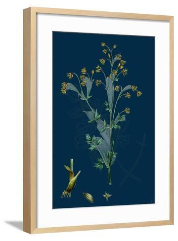 Trifolium Striatum; Soft Knotted Trefoil--Framed Art Print