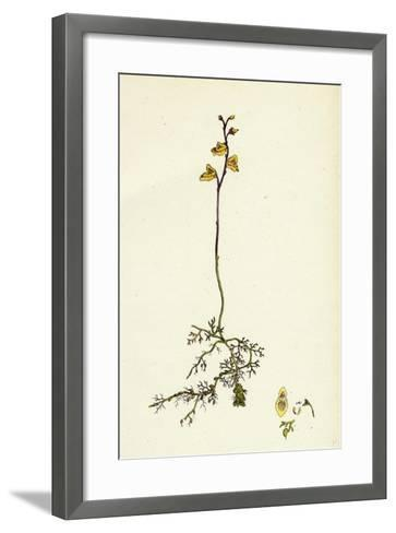 Utricularia Minor Lesser Bladderwort--Framed Art Print
