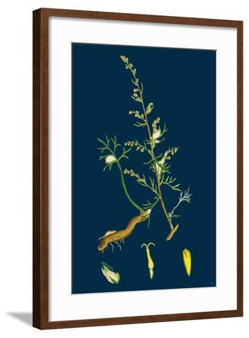 Festuca Sciuroides; Barren Fescue-Grass--Framed Art Print