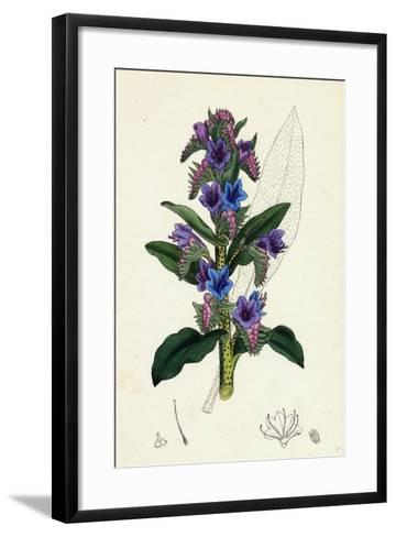 Echium Vulgare Common Viper's-Bugloss--Framed Art Print