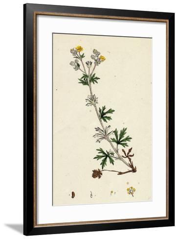 Potentilla Argentea Hoary Cinquefoil--Framed Art Print