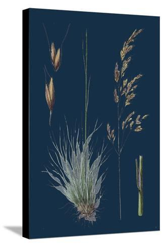 Galium Boreale; Cross-Leaved Bedstraw--Stretched Canvas Print