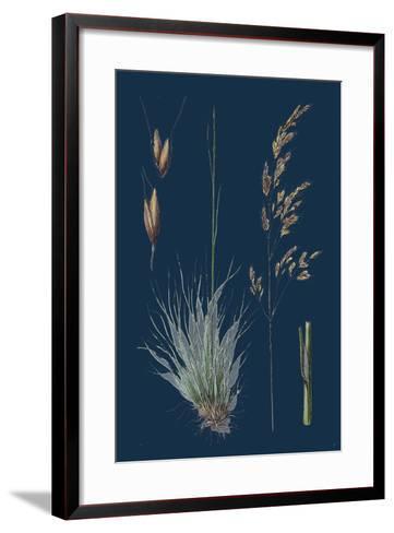 Galium Boreale; Cross-Leaved Bedstraw--Framed Art Print