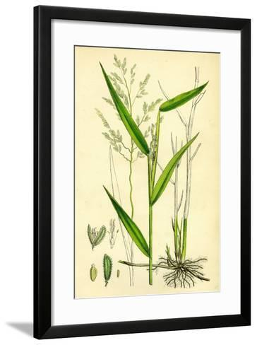 Leersia Oryzoides European Cut-Grass--Framed Art Print
