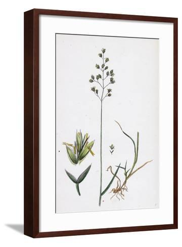 Poa Balfourii Balfour's Meadow-Grass--Framed Art Print