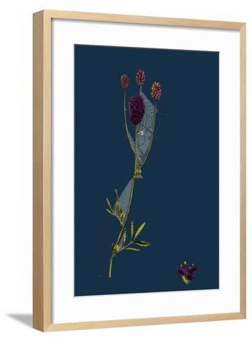 Rosa Mollissima; Soft-Leaved Rose--Framed Art Print