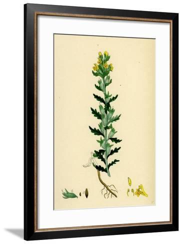 Bartsia Viscosa Yellow Bartsia--Framed Art Print