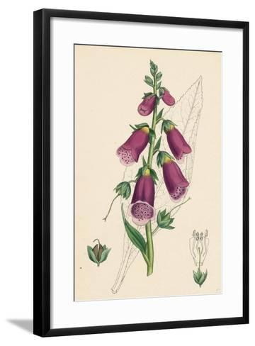 Digitalis Purpurea Purple Foxglove--Framed Art Print