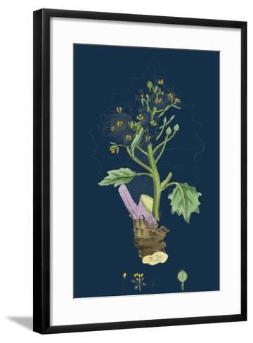 Betula Glutinosa; Common Birch--Framed Art Print