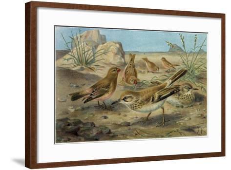 Desert Finch and Desert Lark--Framed Art Print