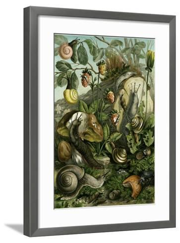 Land Molluscs or Snails and Slugs--Framed Art Print