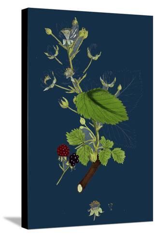 Pyrus Eu-Aria; Common White-Beam--Stretched Canvas Print