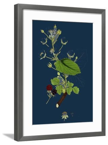 Pyrus Eu-Aria; Common White-Beam--Framed Art Print