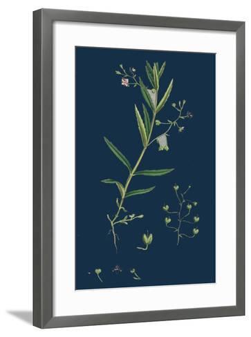 Aster Tripolium; Sea-Side Aster--Framed Art Print