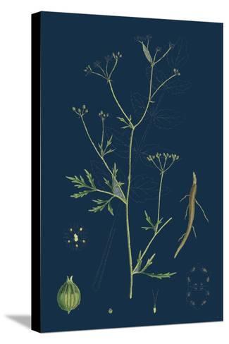 Rumex Scutatus; French Sorrel--Stretched Canvas Print