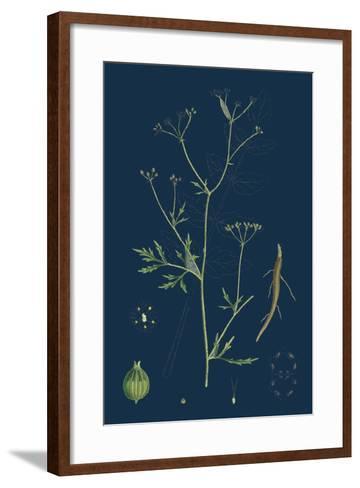 Rumex Scutatus; French Sorrel--Framed Art Print