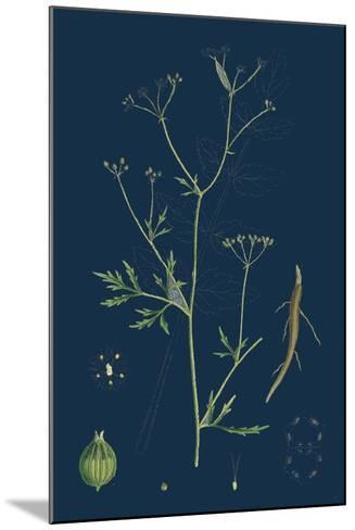 Rumex Scutatus; French Sorrel--Mounted Giclee Print