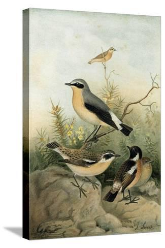 Wheatear Stonechat and Whinchat--Stretched Canvas Print