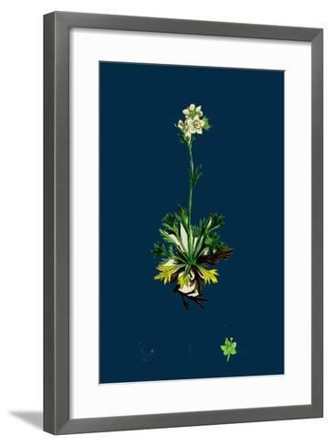 Sedum Acre; Biting Stone-Crop--Framed Art Print