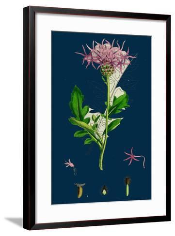 Hesperis Matronalis; Dame's Rocket--Framed Art Print
