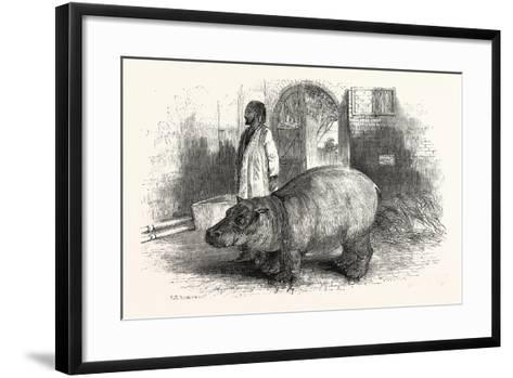 The Behemoth, or Hippopotamus--Framed Art Print