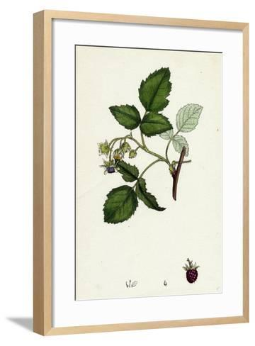 Rubus Idaeus Raspberry--Framed Art Print
