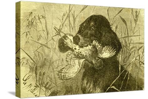 Dog Bird Hunt 1891, Austria--Stretched Canvas Print