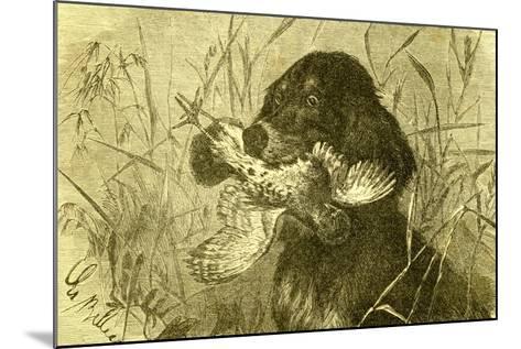 Dog Bird Hunt 1891, Austria--Mounted Giclee Print