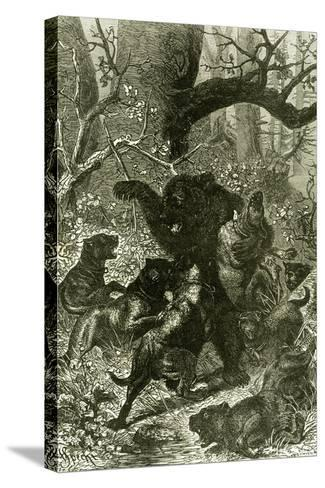 Bear Hunt 1891 Russia--Stretched Canvas Print