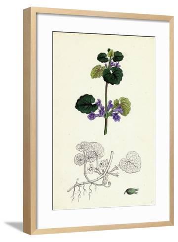 Nepeta Glechoma Ground Ivy--Framed Art Print