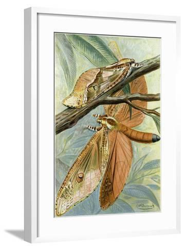 Giant Swift Moth--Framed Art Print
