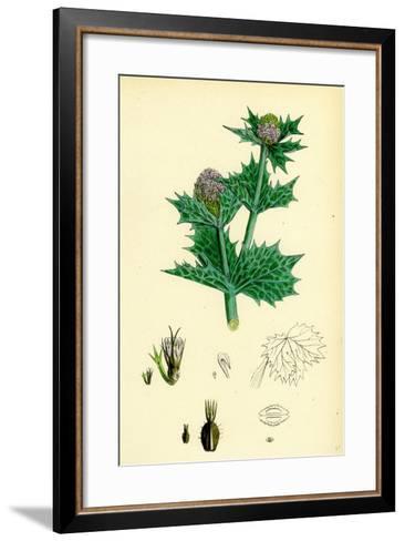Eryngium Maritimum Sea-Holly--Framed Art Print