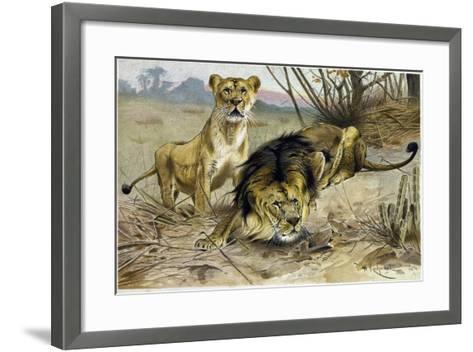 Lion and Lioness--Framed Art Print