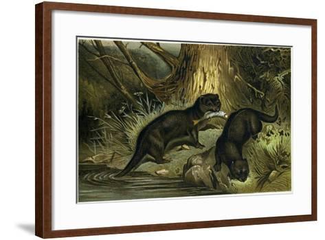 European Otter--Framed Art Print