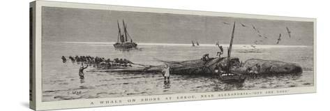 A Whale on Shore at Edkou, Near Alexandria, Off She Goes--Stretched Canvas Print