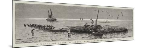 A Whale on Shore at Edkou, Near Alexandria, Off She Goes--Mounted Giclee Print