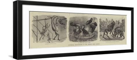 Zoological Eccentricities at the Regent's Park Gardens--Framed Art Print