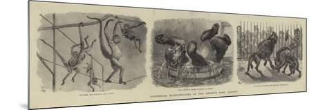 Zoological Eccentricities at the Regent's Park Gardens--Mounted Giclee Print