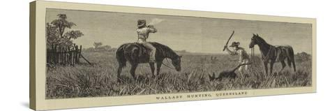Wallaby Hunting, Queensland--Stretched Canvas Print
